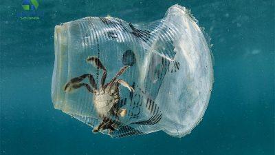 Rác thải nhựa ảnh hưởng nghiêm trọng tới sinh vật biển
