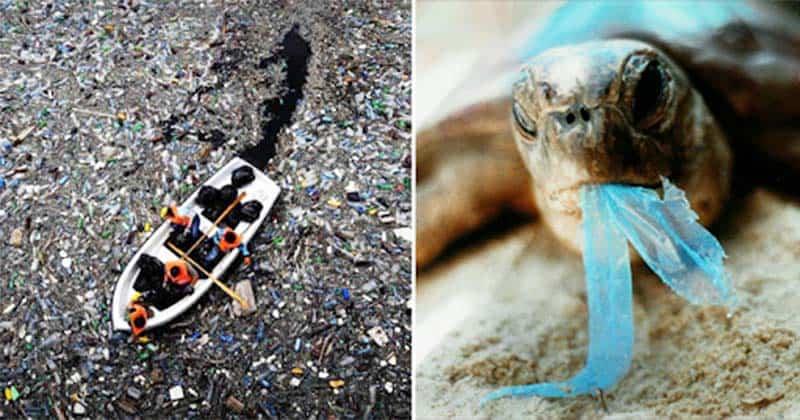 Nhiều sinh vật biển tưởng nhầm rác thải nhựa là thức ăn của mình. (Nguồn ảnh: Thoibaotoday)