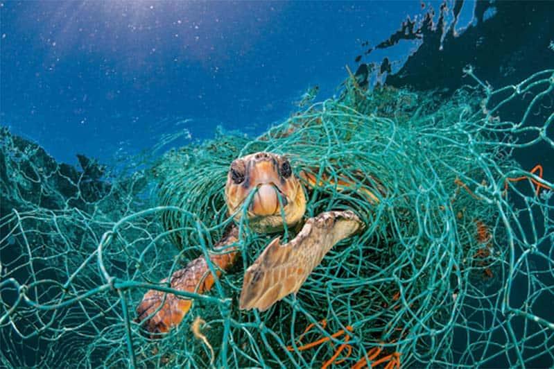 Hình ảnh chú rùa biển đang vướng mắc trong lưới đánh cá còn sót lại của ngư dân