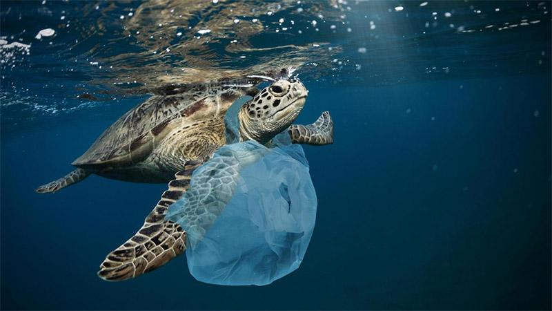 """Hội nghị Davos, Thuỵ Sĩ dự báo đến năm 2050 trọng lượng cá sẽ ít hơn cả lượng rác thải nhựa trên biển. Tức là biển không còn là nhà của cá nữa mà trở thành """"nơi sống"""" của rác thải nhựa. (Nguồn ảnh: anouvellegazette.be)"""