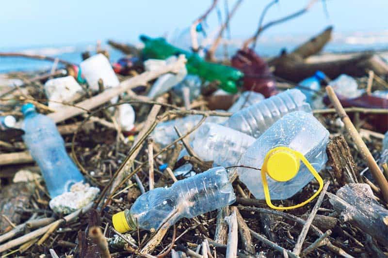Rác thải nhựa ảnh hưởng đến sức khỏe con người, môi trường sống và cả sinh vật biển. (Nguồn ảnh: earth.com)