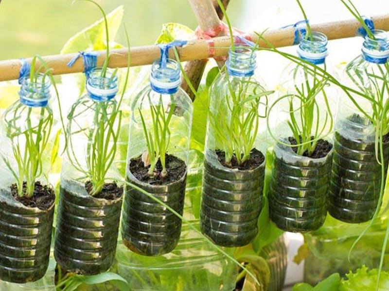 Dùng chai nhựa đã qua sử dụng để trồng cây tại nhà