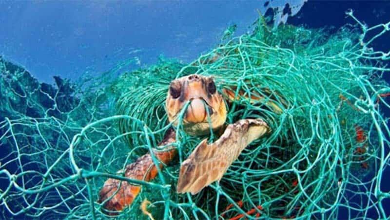 Ngư cụ có khả năng phân hủy sinh học – giải pháp giảm thiểu rác thải nhựa đại dương